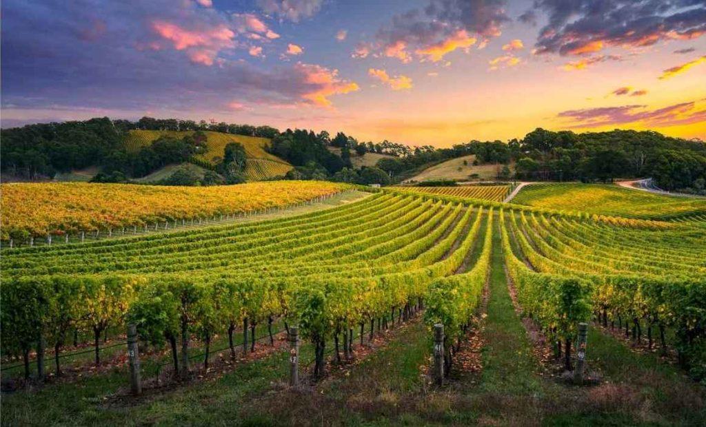 Panorama di un'azienda vinicola. Tra i tanti motivi per scegliere un Wine Wedding.